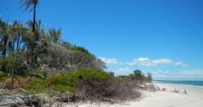 tea008 – Area in Pratigi Beach
